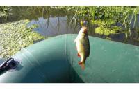 Jackall - Воблер Area Man Crank 22S red & gold - фотография пользователя