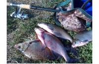 Ведро мягкое Markfish (малое) - фотография пользователя