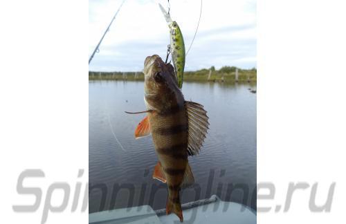 Воблер Pointer 65DD Aurora Bass 075 - фотография загружена пользователем 3