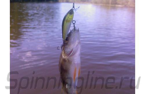 Jackall - Воблер Chubby Minnow 35 ayu - фотография пользователя