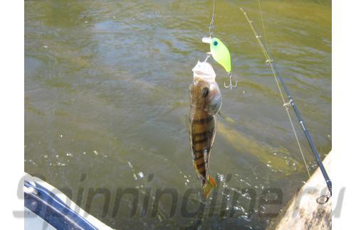 Воблер Chubby 38F matt chartreuse - фотография загружена пользователем 5