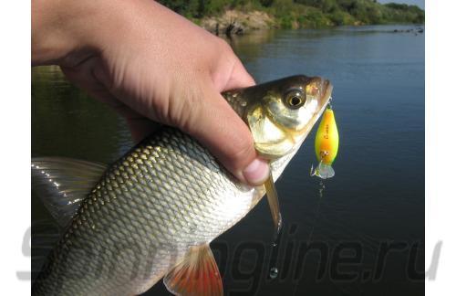 Воблер Chubby 38F matt chartreuse - фотография загружена пользователем 1