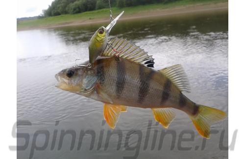 Jackall - Воблер Diving Chubby 38 ayu - фотография пользователя