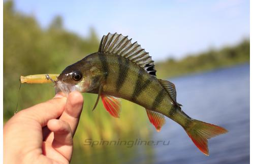 Lucky Craft - Воблер Flash Minnow TR 65SP N Briliant Brown 154 - фотография пользователя