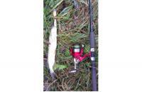 Shimano - Катушка Catana 4000 RB - фотография пользователя