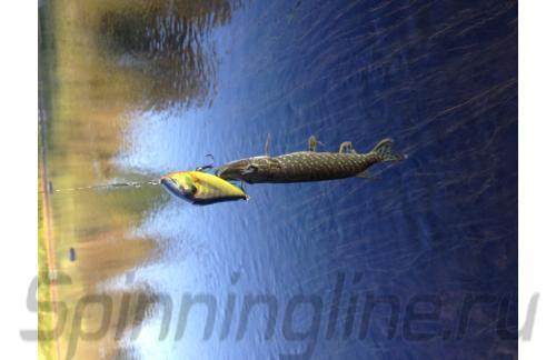 Salmo - Воблер Slider F10 RHP(HP) - фотография пользователя