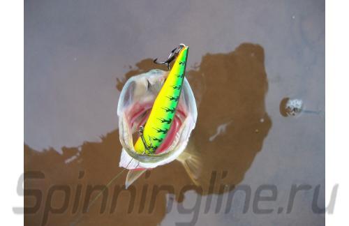 Fishycat - ������ Libyca 110SP X03 - ���������� ������������