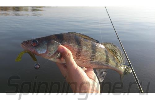 Lucky John - Tig Tail 71/SB05 - ���������� ������������
