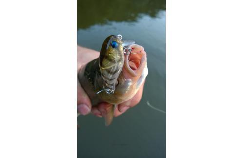 Jackall - Воблер Chubby 38F SSR ghost shrimp - фотография пользователя