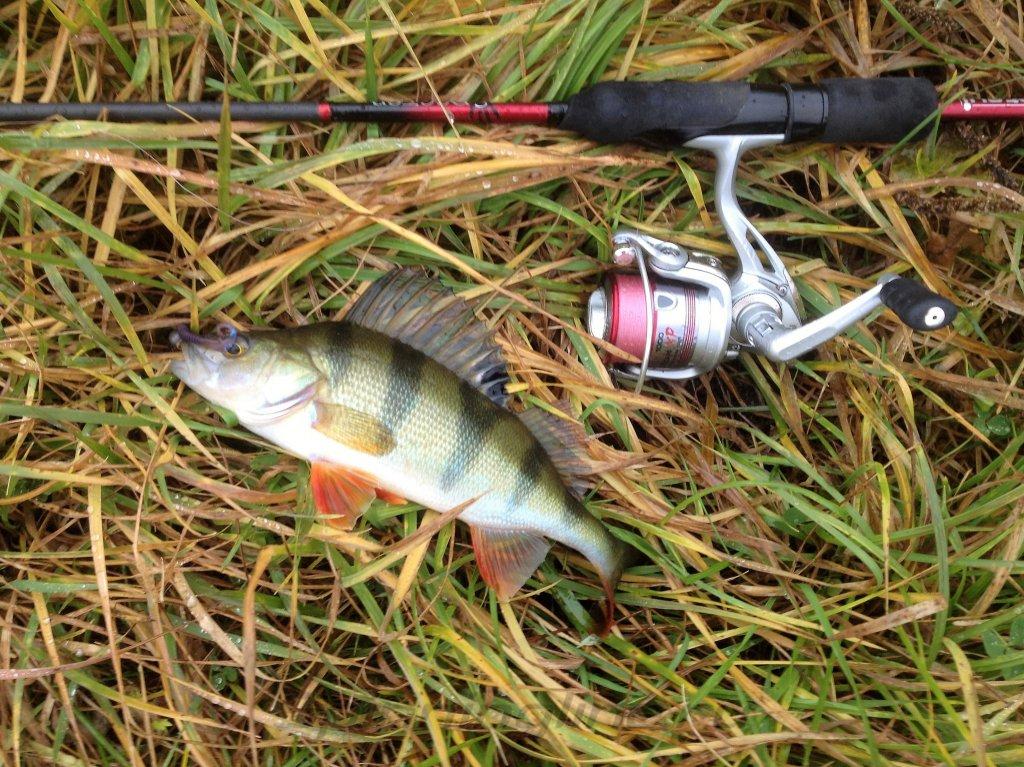 Катушка Stinger Predator XP 1000 - фотография загружена пользователем 2