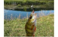 """Crazy Fish - Polaris 1.8"""" 10-5 - фотография пользователя"""