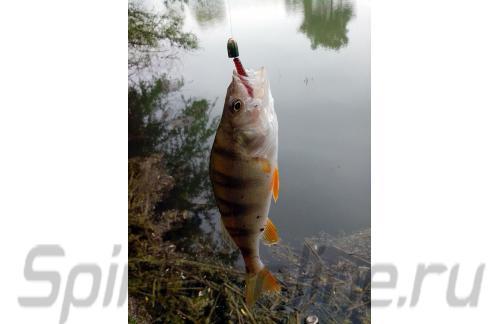 """Crazy Fish - Приманка Polaris 1.8"""" 11-4 - фотография пользователя"""
