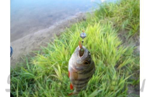 "Crazy Fish - Tipsy 2"" 14-5 - фотография пользователя"