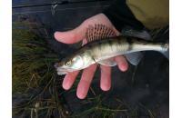 Crazy Fish - Cruel Leech 13-6 - фотография пользователя