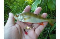 Extreme Fishing - Блесна Indeed R 1,5гр G-G - фотография пользователя