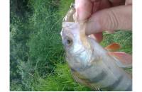 Lucky John - Приманка Tioga 62/CA35 - фотография пользователя