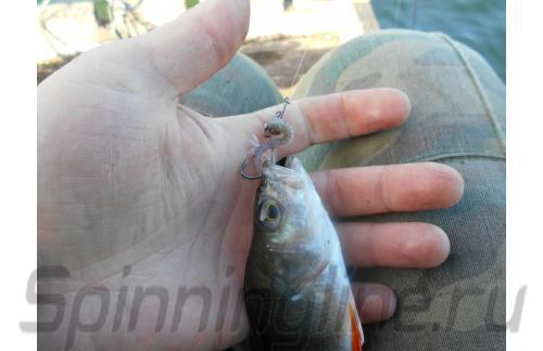 """Aiko - Furry 2"""" 003 N.Gray shrimp smell - фотография пользователя"""