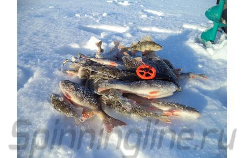 Stinger - ������ ������ Icehunter Premium Uni - ���������� ������������
