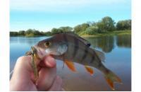 Lucky John - Hogy Shrimp 76/PA03 - фотография пользователя