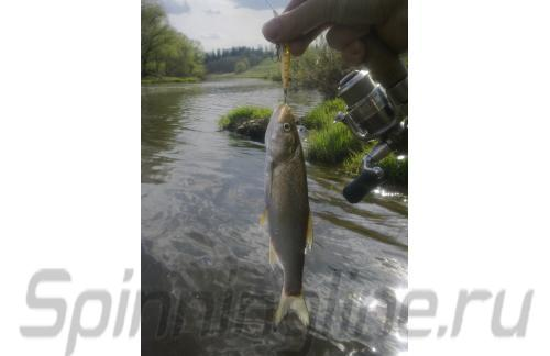 ZipBaits - ������ Rigge MD 56SS 810 - ���������� ������������