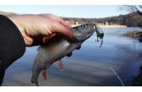 Fishycat - Воблер Icat 32F-SR R12 - фотография пользователя