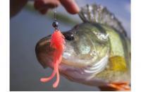 """Crazy Fish - Allure 1.6"""" 9-4 - фотография пользователя"""