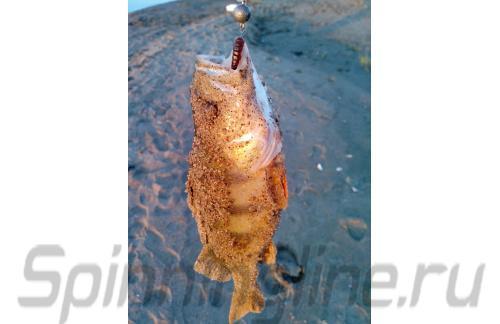 Kosadaka - Приманка Sly Worm 50 MO - фотография пользователя