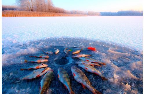 Stinger - Удочка зимняя BalsaSensor Orange - фотография пользователя