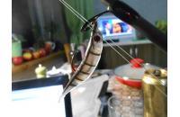 Allvega - LL Flashy Shad 115 silver fry - фотография пользователя
