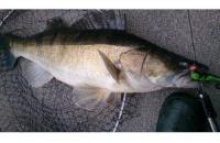 Окунев Владимир - Поролоновая рыбка Окунева 1Б-2 - фотография пользователя