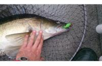 Окунев Владимир - Поролоновая рыбка Окунева 1В-2 - фотография пользователя
