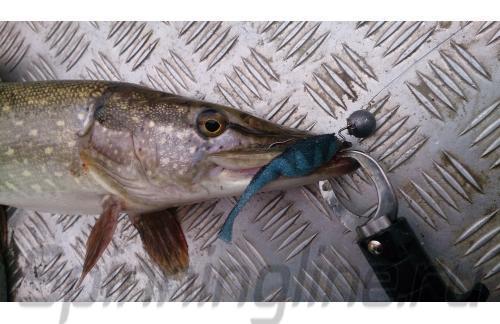Окунев Владимир - Поролоновая рыбка Окунева 2В-1 - фотография пользователя