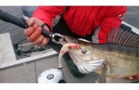 Окунев Владимир - Поролоновая рыбка Окунева 3Б-2 - фотография пользователя