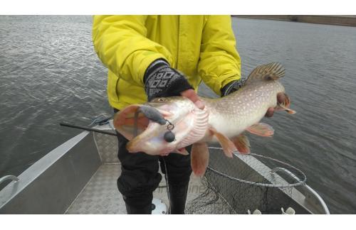 Поролоновая рыбка Окунева 4Б-1 - фотография загружена пользователем 1