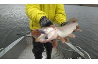 Окунев Владимир - Поролоновая рыбка Окунева 4Б-1 - фотография пользователя