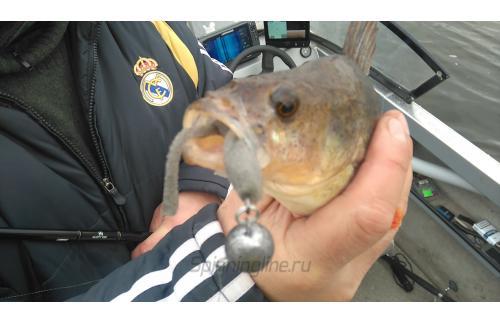 Поролоновая рыбка Окунева 4В-2 - фотография загружена пользователем 1