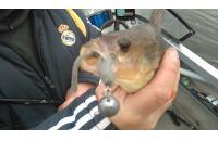 Окунев Владимир - Поролоновая рыбка Окунева 4В-2 - фотография пользователя
