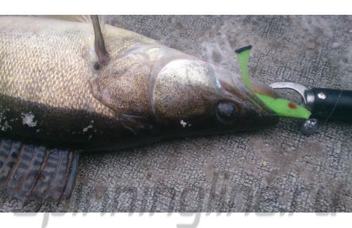 Окунев Владимир - Поролоновая рыбка Окунева 6Б-1 - фотография пользователя