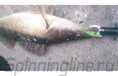 Окунев Владимир - Поролоновая рыбка Окунева 6В-1 - фотография пользователя