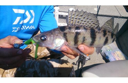 Поролоновая рыбка Окунева 6В-2 - фотография загружена пользователем 1