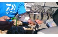 Окунев Владимир - Поролоновая рыбка Окунева 6В-2 - фотография пользователя