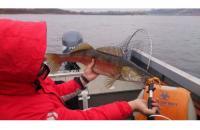Окунев Владимир - Поролоновая рыбка Окунева 7А-2 - фотография пользователя