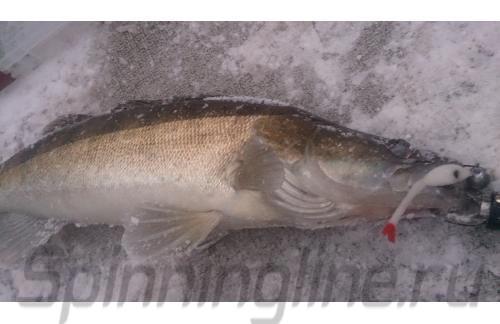 Окунев Владимир - Поролоновая рыбка Окунева 9В-1 - фотография пользователя