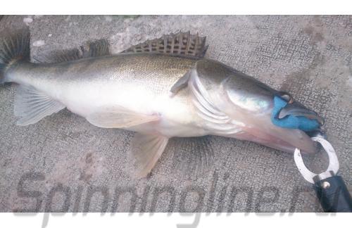 Поролоновая рыбка Окунева 2Б-2П - фотография загружена пользователем 1