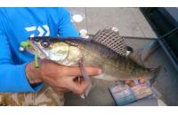 Окунев Владимир - Поролоновая рыбка Окунева 6В-2П - фотография пользователя