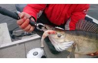 Окунев Владимир - Поролоновая рыбка Окунева 3А-2 - фотография пользователя