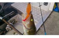 Окунев Владимир - Поролоновая рыбка Окунева F-7 - фотография пользователя