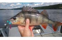 Окунев Владимир - Поролоновая рыбка Окунева Y-7 - фотография пользователя