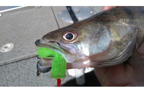 Окунев Владимир - Поролоновая рыбка Окунева W-7 - фотография пользователя