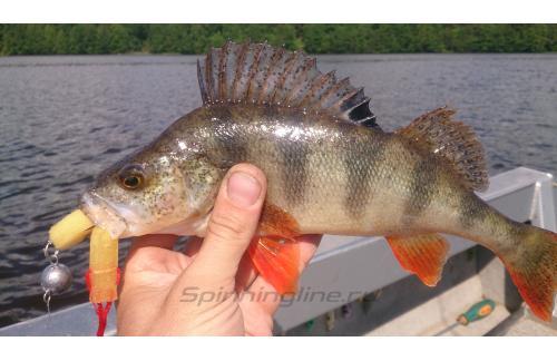 Окунев Владимир - Поролоновая рыбка Окунева L-10 - фотография пользователя